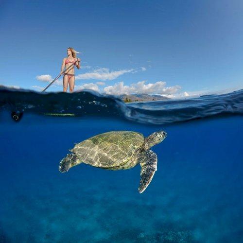 Подводные фотографии Дэвида Флитэма