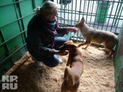 Трогательная история о собаке и волчонке