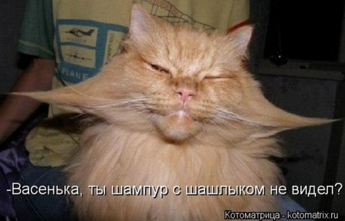 Веселые котоматрицы (32 шт)