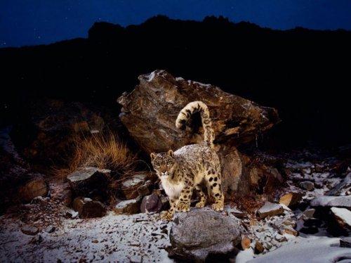 Лучшие фотографии августа от National Geographic