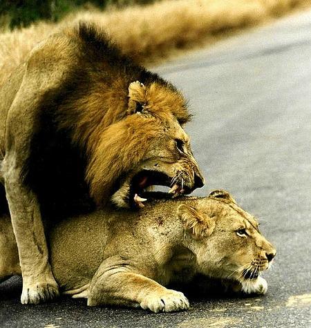 Топ-10: самые странные любовные ритуалы у животных