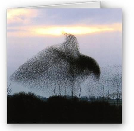 Фантастические фигуры из птичьих стай