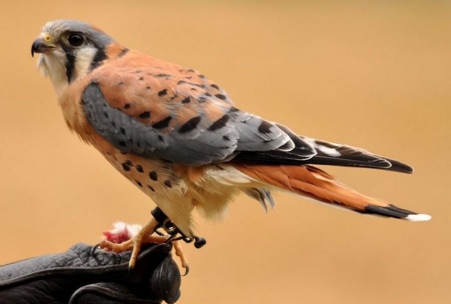 фото самые красивые птицы