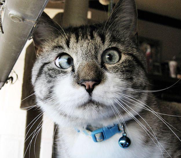 Кто потерял самого милого котенка? в Екатеринбурге. Цена ... | 548x625