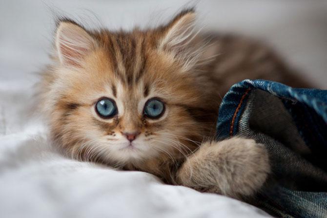 фото милого котенка