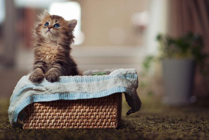 Фото самых милых кошек
