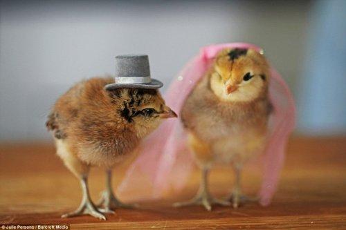 Очаровательные цыплята в шляпках