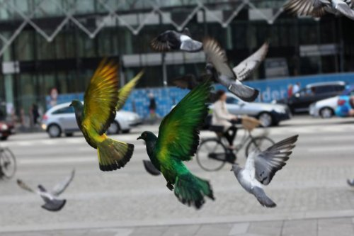 Проект в поддержку голубей