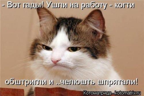 Самые позитивные котоматрицы (39 шт)
