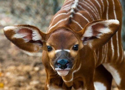 Милые экзотические зверята-детеныши