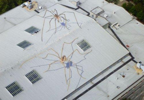 Иллюзия на крыше
