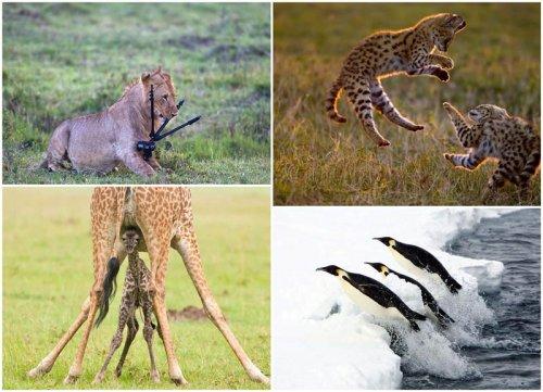 Обитатели дикой природы через объектив фотографа Пола Голдштайн