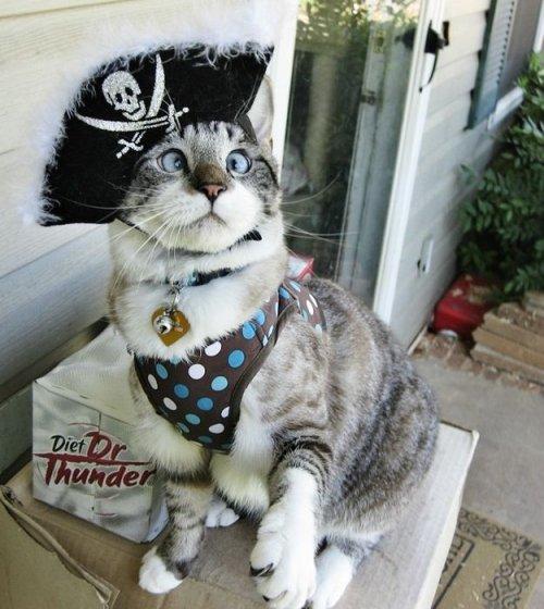Фотографии самого милого косоглазого кота в Интернете