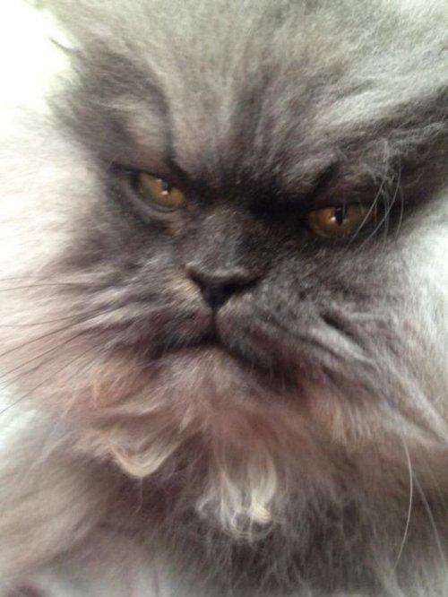 Самый грозный кот в мире