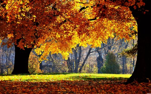 Красивая подборка осенних пейзажей