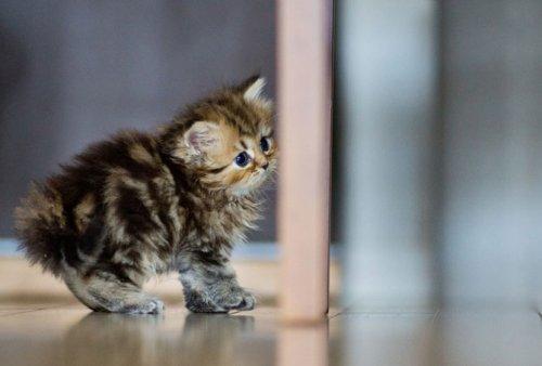 Фотографии самого милого котенка в мире