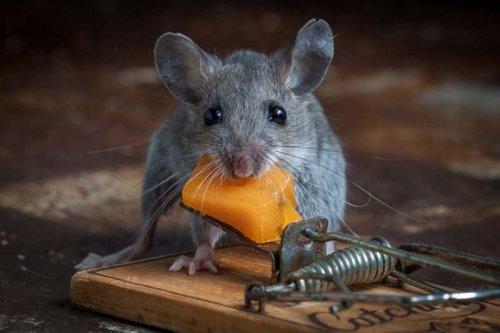 Триллер про мышь