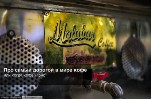 Как производят самый дорогой кофе в мире