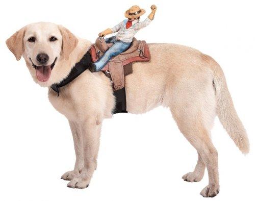 Какой костюм надеть на свою собаку на Хэллоуин?