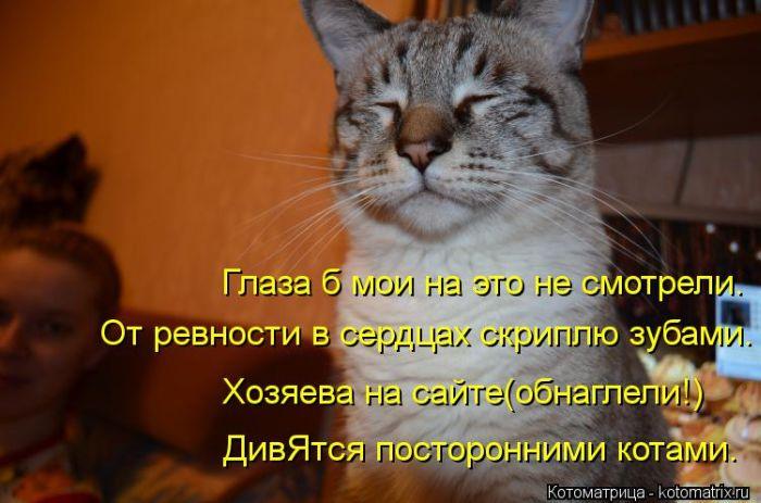 Демотиваторы с кошками в прикол мебель