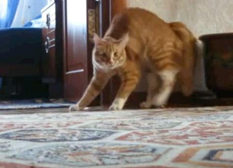 Реакция кота на объектив