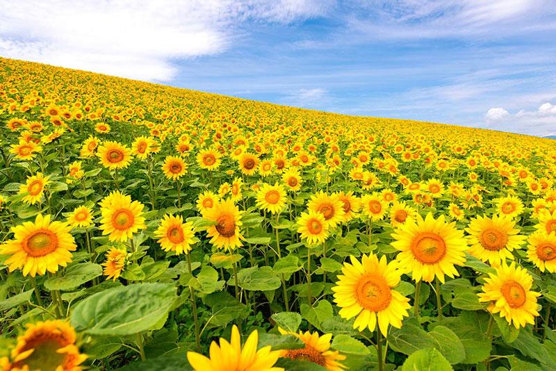 Красота растений летом 57
