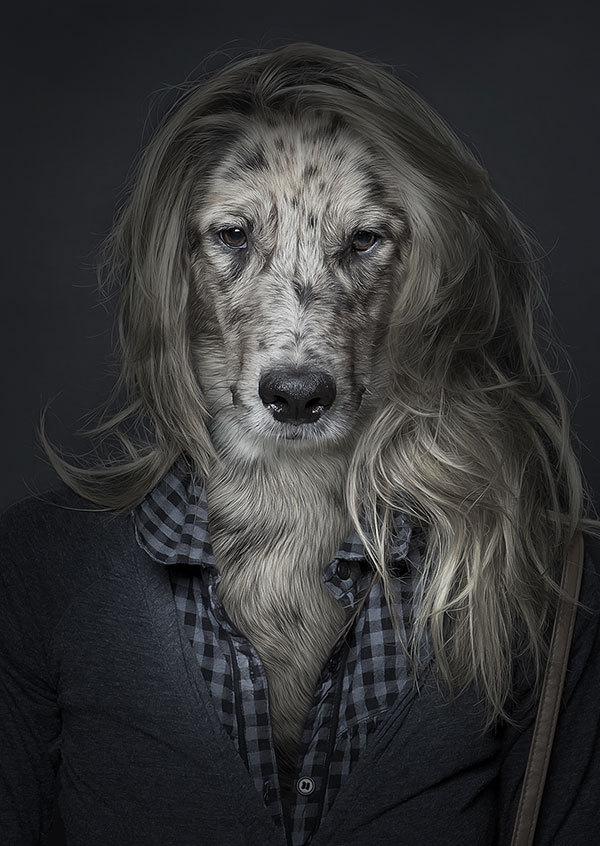 которым странные картинки с собаками мог играть