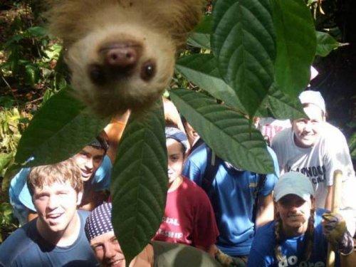 Забавные фотографии с милыми животными