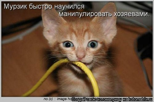 Лучшие котоматрицы недели (34 шт)