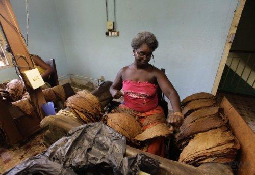 Кубинские сигары: как их делают