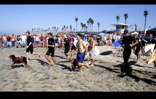 Соревнования среди собак-серфингистов