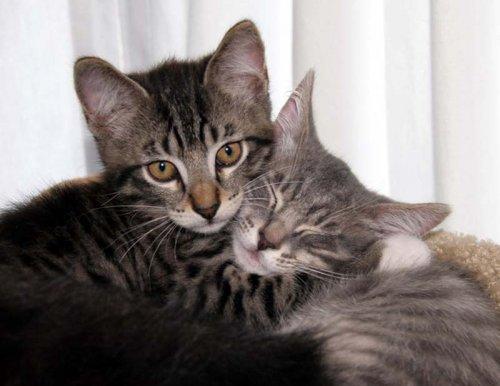 Котята и кошечки в объятиях друг друга