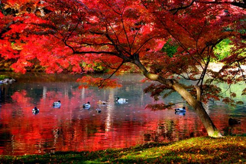 Киото, окрашенный осенней листвой
