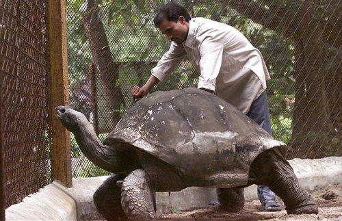 Топ-10: животные-долгожители нашей планеты