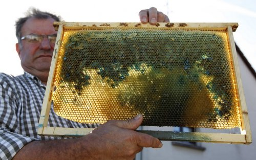 Неправильный мед в коммуне Рибовилль (Франция)