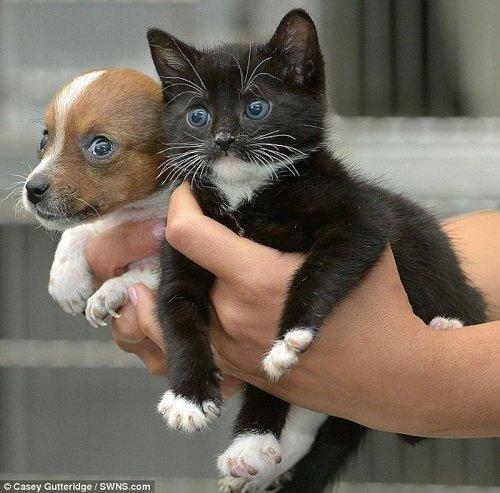 Неразлучная дружба между собачкой и кошечкой