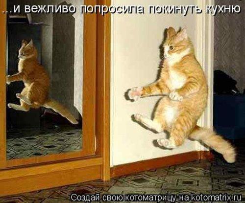 Котоматрицы - веселые картинки с котятами
