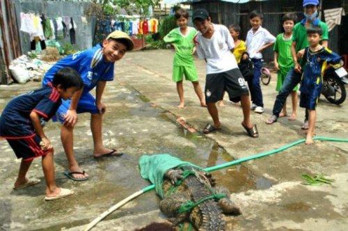 Во Вьетнаме крокодилы сбежали с фермы