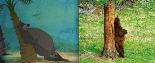 Животные-персонажи диснеевских мультфильмов в реальной жизни