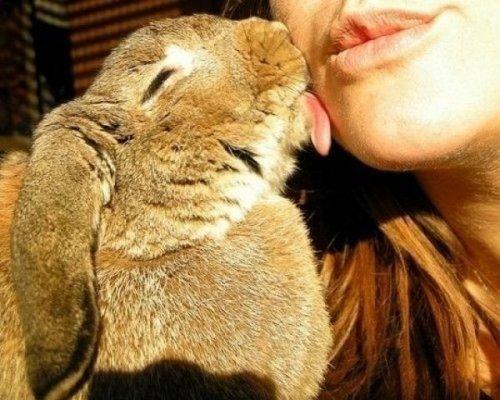 Позитивные картинки про любовь