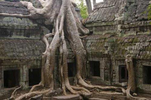 10 наиболее необычных деревьев