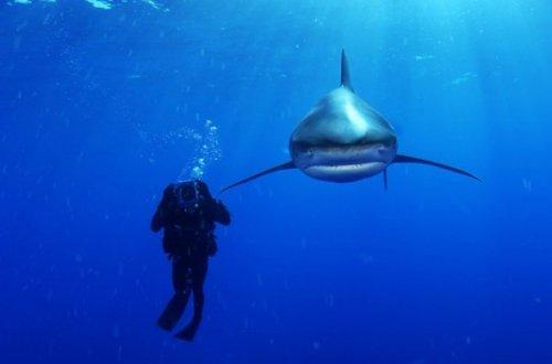 Великолепие подводного мира (47 шт)