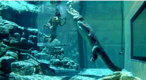 В аквариуме с крокодилом