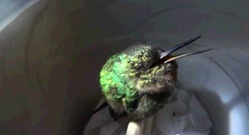 Сладкий сон колибри