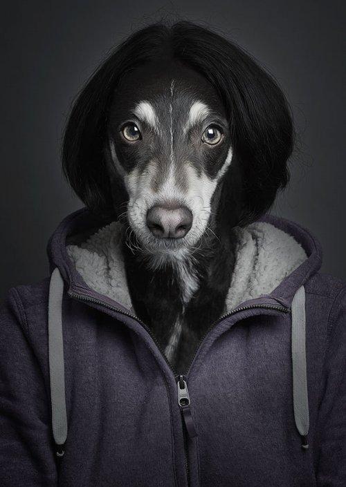 """Необычные фотографии """"очеловеченных"""" собак"""