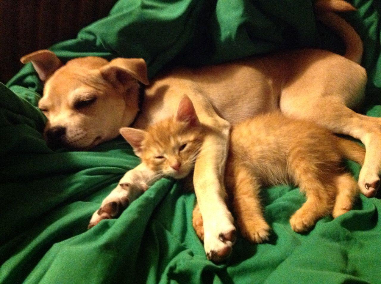 Картинки милые животные спокойной ночи