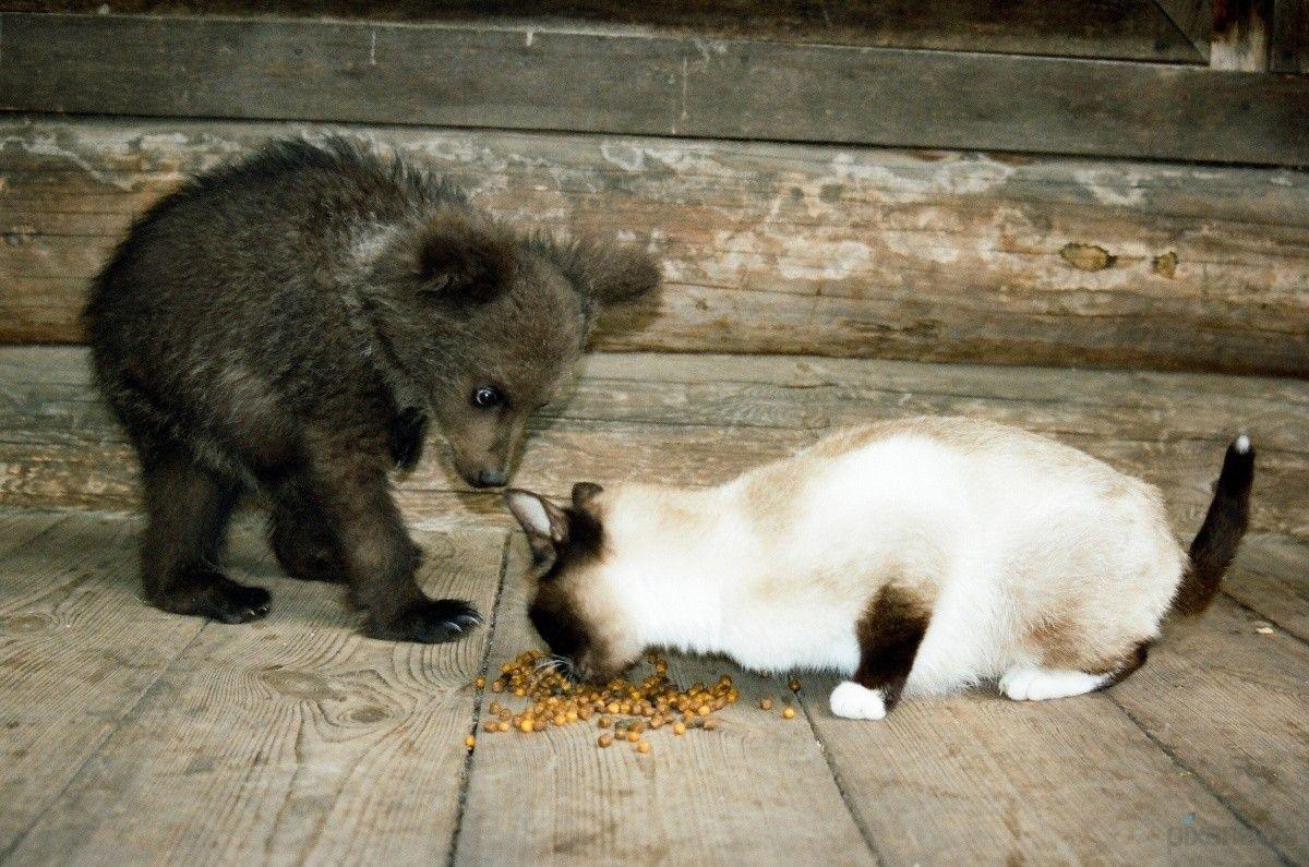 ними фото медведь с мышкой стол скорей, ёлку
