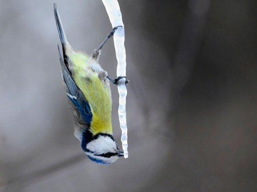 Коллекция лучших фотографий от National Geographic (октябрь 2012)
