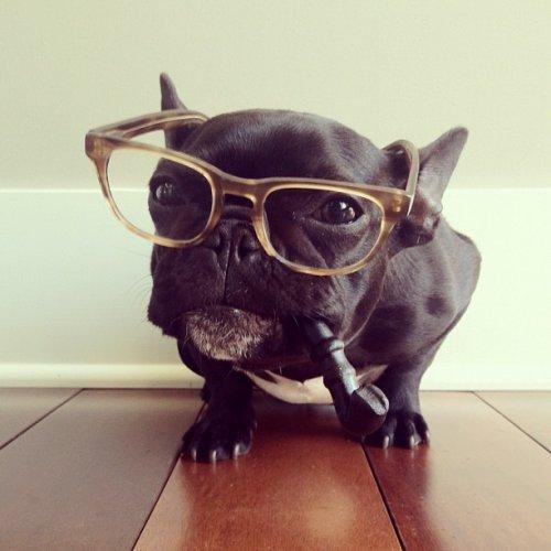 Смешные костюмы пса по кличке «Троттер» от фотографа Сони Ю