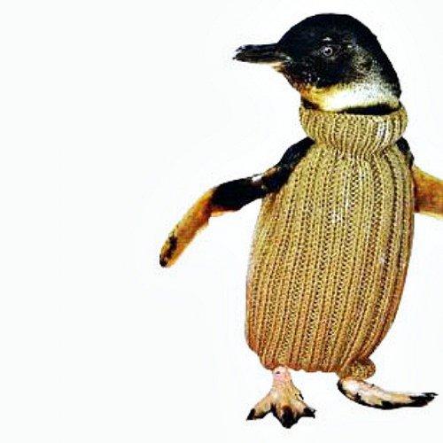 Свитеры для пингвинов